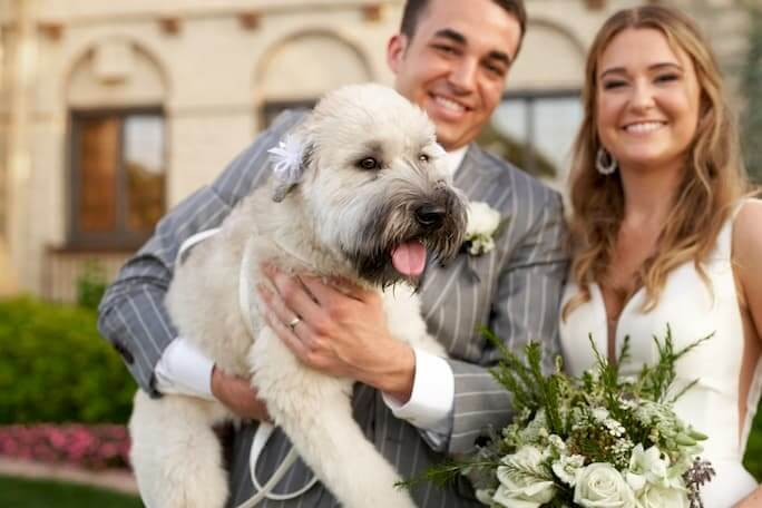stella york style 6581, bride and groom holding their dog